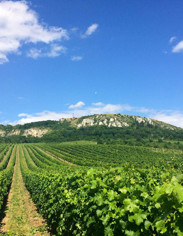 the best wine tour in South Moravia