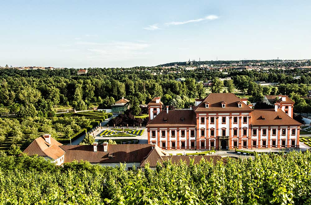 The view from the main vineyard in Prague